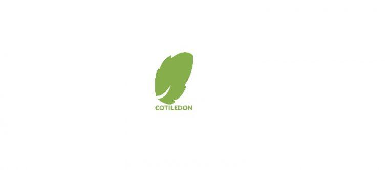 Consultoría Cotiledón
